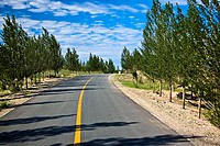 Treelined along a road, Inner Mongolia, China