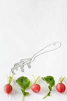 Radishes and arugula lined up below drawing of gardening fork