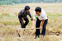 Farmers working in a field, Zhigou, Shandong Province, China