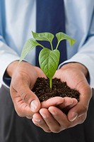 Mixed race businessman holding soil and seedling