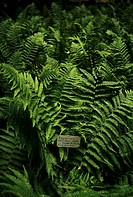 fern, orto botanico di padova, the world´s oldest academic botanical garden, padua, veneto, italy
