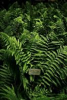 fern, orto botanico di padova, the world´s oldest academic botanical garden, padua, veneto, italy