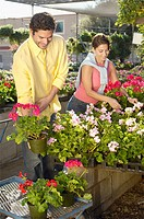 Couple selecting plants at nursery