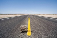 Turtle walking in middle of remote highway