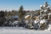 Houses and trees covered with snow