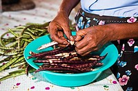 Mid section view of a woman's hand podding dried beans, Hidalgo, Papantla, Veracruz, Mexico