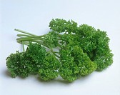 parsley / Petroselinum crispum