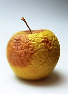 One rotten and wrinkled yellow golden apple