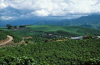 Coffee plantations, Costa Rica