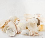 Closeup of seashells