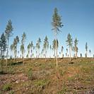 Finland, Tree landscape
