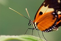 Schmetterling im Detail