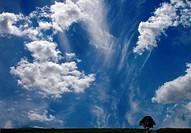 Einsam mit guter Sicht nach oben