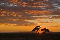 Africa, Namibia, Etosha National Park, Sunset