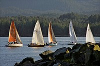 Sailboats race in competition near Ketchikan, Alaska during Summer