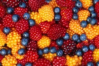 Close up of Salmon & Blue berries together Juneau Alaska Southeast Summer
