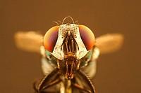 Fliege mit aufgerissenem Fresswerkzeug