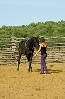 dressage _ girl and Arabian horse
