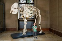 Boy looking at an elephant skeleton