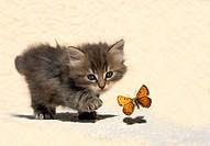 hunting kitten