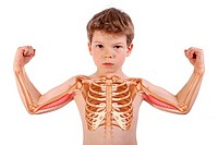 6_year_old boy : rib cage and arms with brachial triceps.