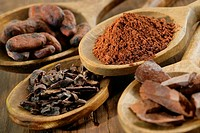 COCOA Illustration of the steps in the production of chocolate. Cocoa beans, crushed fava beans, pieces of flat cakes and cocoa in powder.