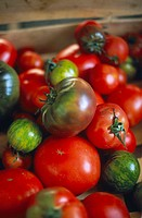 TOMATO Organic tomatoes.
