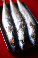 FISH Mackerels are fishes living near the surface and so they contain heavy metals.