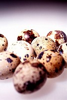 _en_cours Quail eggs. Worldwide distribution except for South Africa