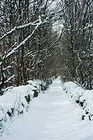 Tree-lined path in snow