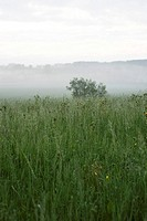 Foggy rural landscape