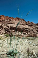 Rocky desert landscape, focus on plant