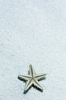 Starfish upside down on sand