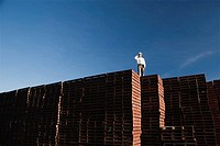 Foreman on pallet stacks
