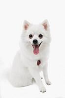 Portrait of panting dog