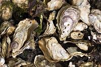 Oyster shells full_frame