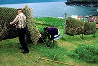 Haymaking, Gj&#243;gv, Eysturoy, Faroe Islands, Denmark