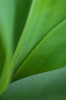 Green leaves, extreme close-up