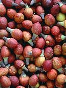 Figs Ficus sp..