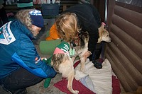 Vets treating hip injury of a Yukon Quest racing dog, sled dog, Dawson City, Yukon Territory, Canada, North America