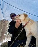 Vet checking the health of a sled dog, Yukon Quest Sled Dog Race, Dawson City, Yukon Territory, Canada, North America