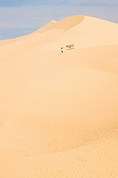A woman a cow walking alone on a red sand dune, Mui Ne, Vietnam, Southeast Asia, Asia