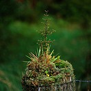 Weathered, fence, old, grows over, plants, moss, little tree, detail,