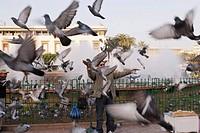 Pigeons, Place Mohammed V, Casablanca, Africa