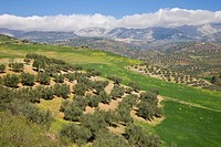 Andalusian countryside near Riogordo, Malaga Province, Spain