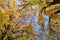 broad_leaved trees in autumn