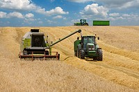 Tractors and combines in barley field