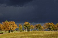 Dark clouds above a autumnally coloured Tree row