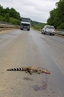 dead animals on roads