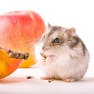 Hamster with apple